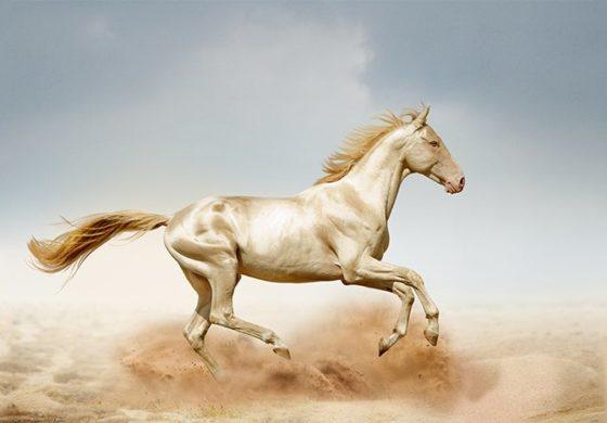 Ги нарекуваат рајски коњи, во светот ги има 6.000, а еден е во сопственост на познат диктатор (ФОТО)