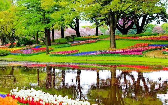 Парк во Холандија како од бајките, во него има 800 видови лалиња (ФОТО)