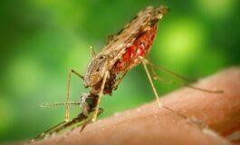 7 природни начини за борба против комарците