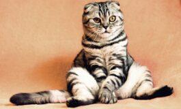 Мачка криумчарела мобилни телефони во затвор