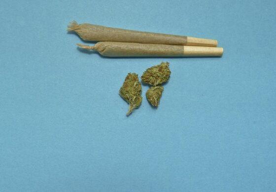 Приведен 15-годишник од Куманово со марихуана