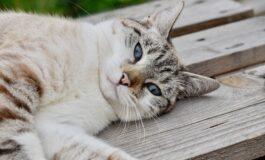 Работа од соништата за љубителите на мачки