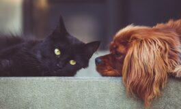 Колку домашните миленици му помагаат на нашето здравје?