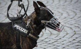 Пратка вредна 87 милиони евра, полициско куче откри 730 килограми хеорин