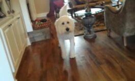 ПОЗИТИВА НА ДЕНОТ: Кучето го доби најубавиот подарок за својот роденден (ВИДЕО)