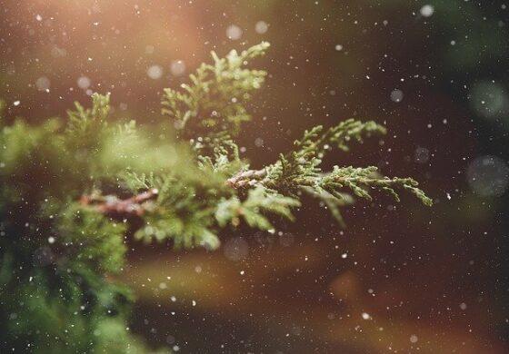 Њујорк ќе ги рециклира новогодишните елки