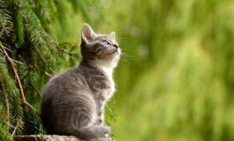 Факти за мачките кои не сте ги знаеле, а научно се потврдени