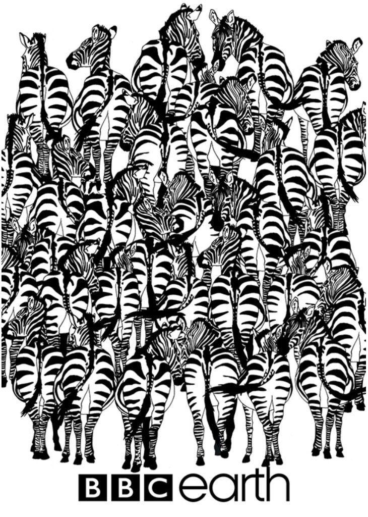 577a504a-6fb0-4216-9ea4-2d510a0a0a64-zebre